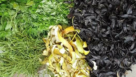 Phục hồi tóc hư tổn bằng thảo dược thiên nhiên